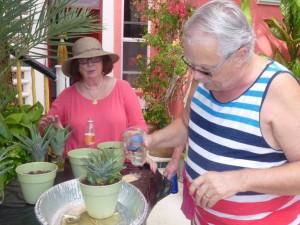 Pineapple Planting